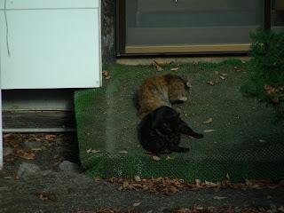 黒・茶・サバ色 三色団子猫
