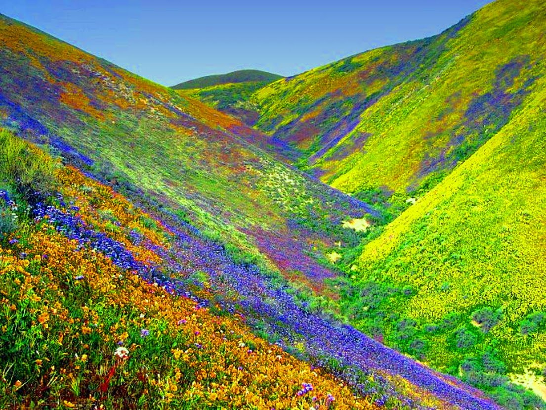 Places To See Before You Die: Valley Of Flowers