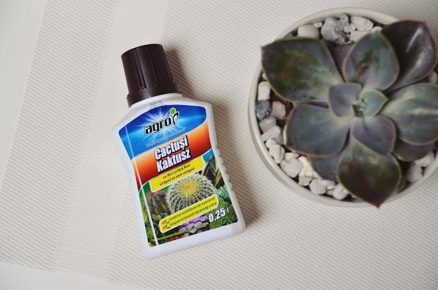 ingrasamant lichid cactusi suculente