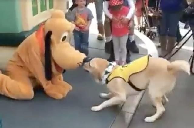El perro que enloquece de emoción al conocer a Pluto en Disneyland