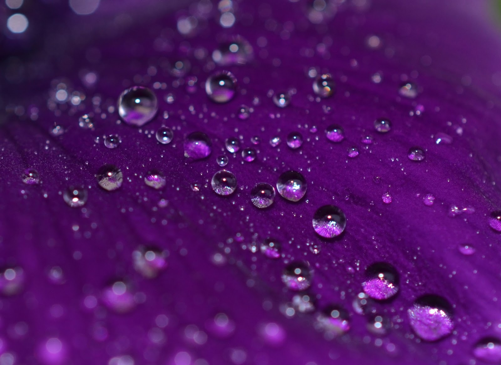 Purple Raindrops Images - Reverse Search