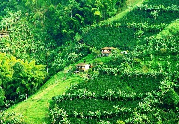 Paisagens Cultural do Café da Colômbia Foi Inscrita Pela Unesco Como Patrimônio Mundial