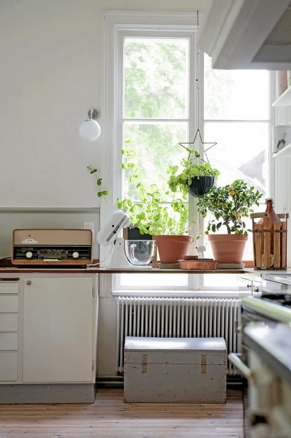Tips For Decorating The Kitchen With Hanging Plants 1