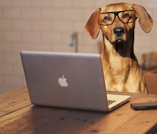 dog blogging