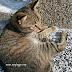 Kucing Jalanan Sekadar Minta Secebis Simpati Insan