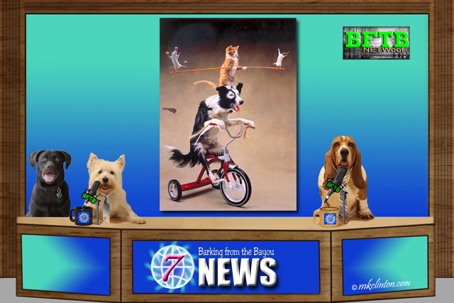 BFTB NETWoof News with trick dog on back screen