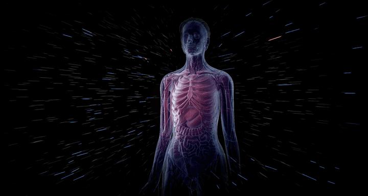 Human Body Cells