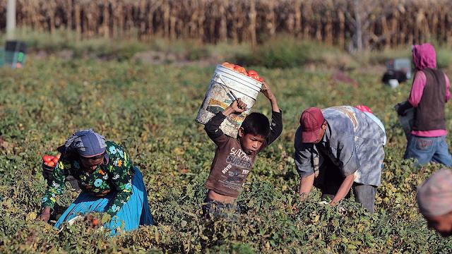 Productores y empresarios de San Luis Potosí buscan legalizar el trabajo infantil. ¿Que Opinas?