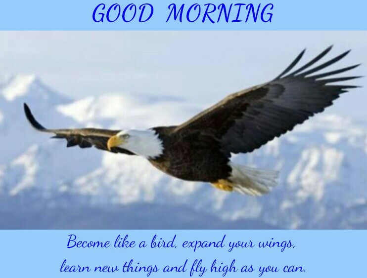 Good Morning Quote Become Like A Bird Expand Your Wings Learn New