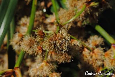 hierbas nativas argentinas
