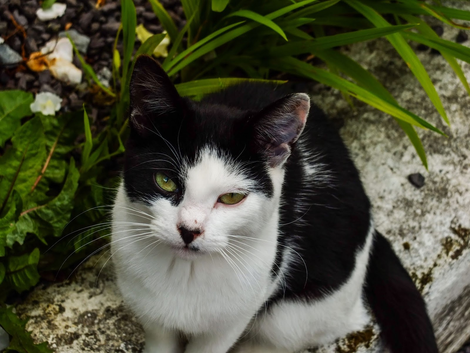 A black and white cat with green eyes sitting on the wall.