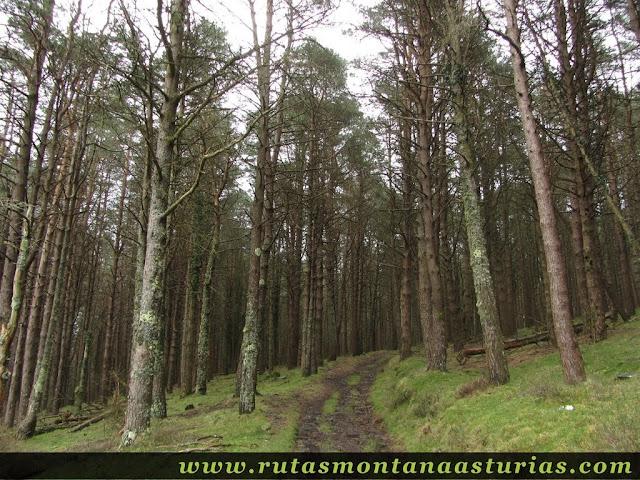 Atravesando pinar