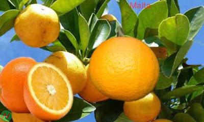 malta; malta fruit