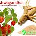 Ashwagandha : Manfaat Klinis, Dosis dan Efek Samping