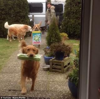 คลิปสอนน้องหมาช่วยถือของเข้าบ้าน