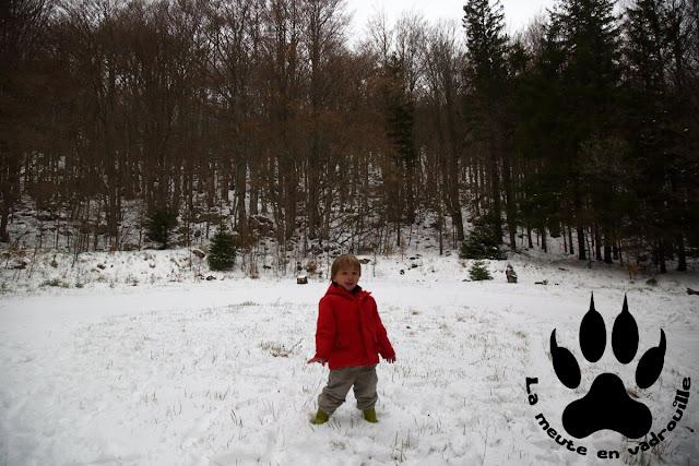 petit-loup-neige-foret-ilirska-bistrica-slovenie