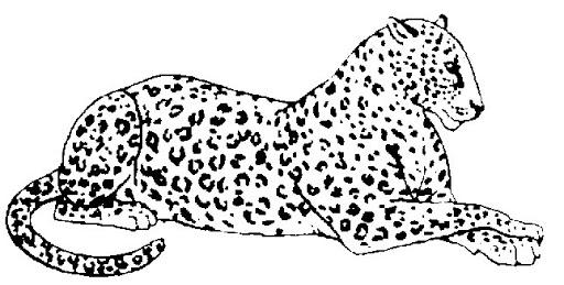 Dibujo Leopardo Para Colorear E Imprimir: Blog MegaDiverso: Leopardo Para Imprimir Y Pintar