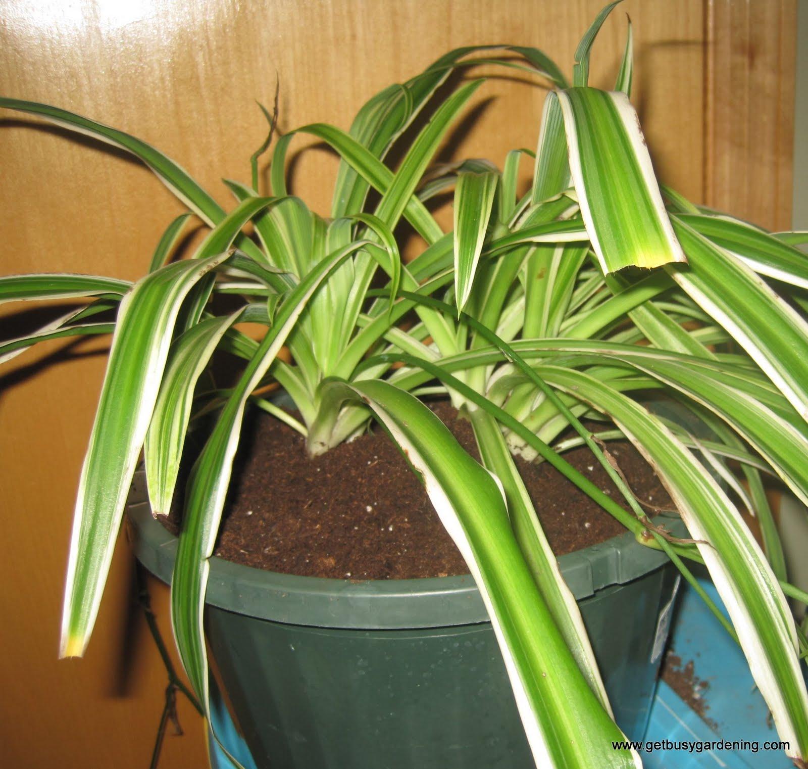 Tips For Repotting Houseplants