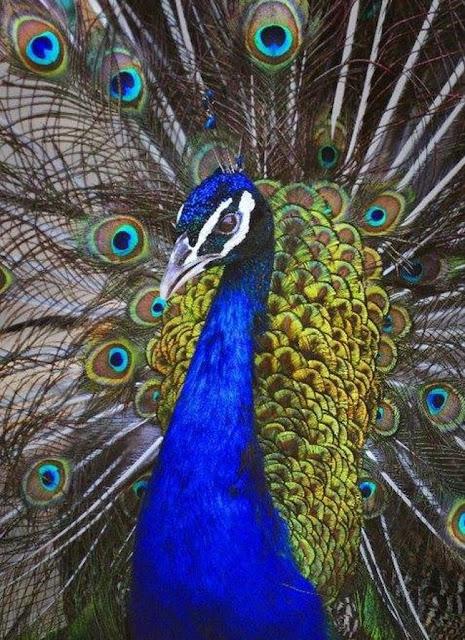 الطيور في حديقة حيوان الإسكندرية Alexandria Zoo Birds