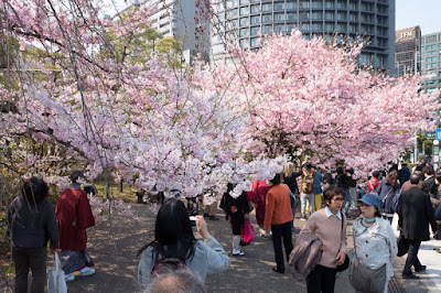 National Theatre Tokyo sakura with visitors.