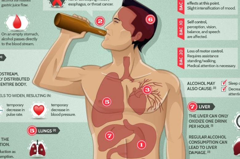 The Short And Long Term Effects Of Alcohol On The Body The Big Riddle