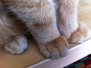 ginger cat paws