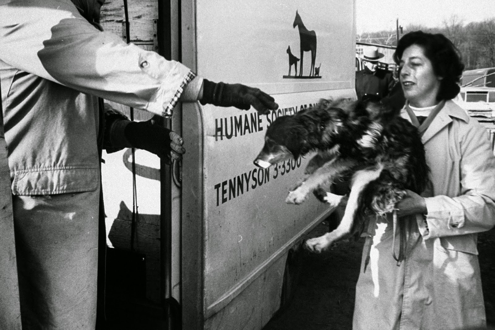 Contact concentration camps for animals 72