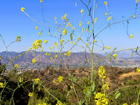View north from Toyon Trail in Griffith Park toward Burbank and the Verdugo Mountains