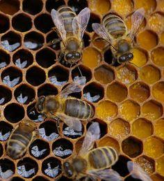 Πωλείται μέλι πευκοθύμαρo στις Μοίρες Ηρακλείου Κρήτης