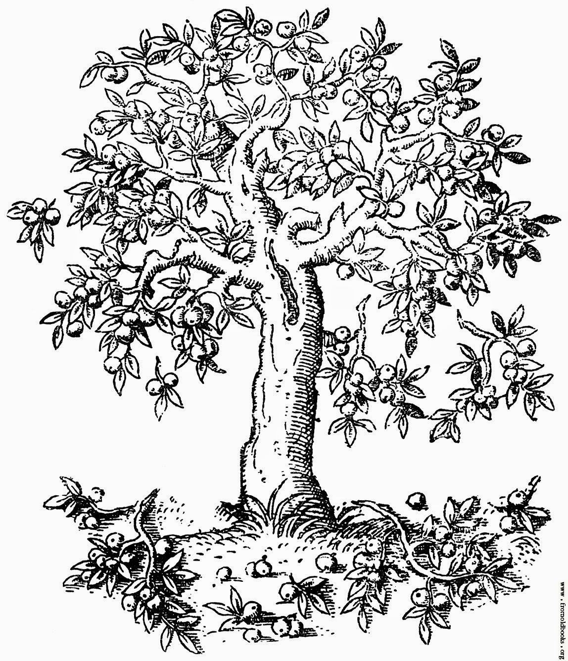 coloring pages fruit trees - photo#21
