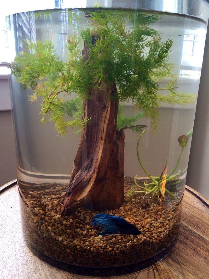 Most Noticeable Betta Fish Aquarium Decor