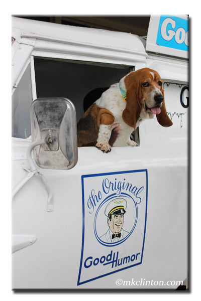 Bentley Basset standing in the window of a Good Humor Ice Cream truck