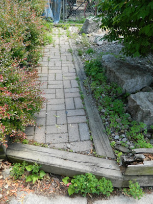 Leslieville front garden cleanup before weeding by Paul Jung Gardening Services Toronto
