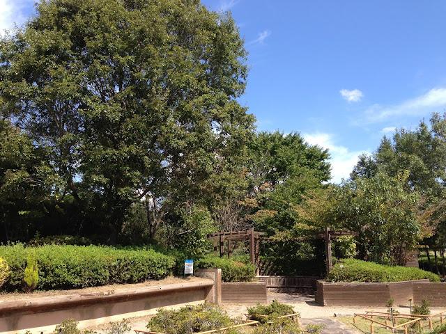 イメージ画像 緑の公園