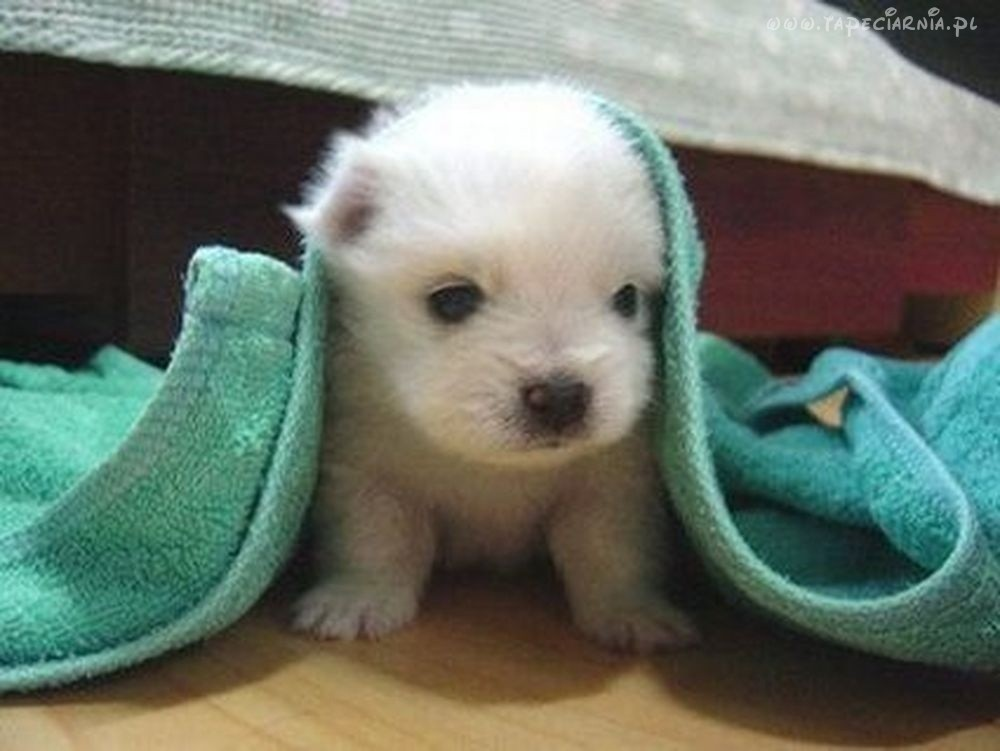 Funny cute dogs and puppies: November 2011