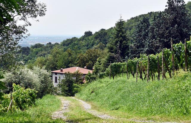 italy, italia, country, countryside, sotto il monte, lombardia, forest, lomatunnelmia, mountains, viinitila, viiniviljelys