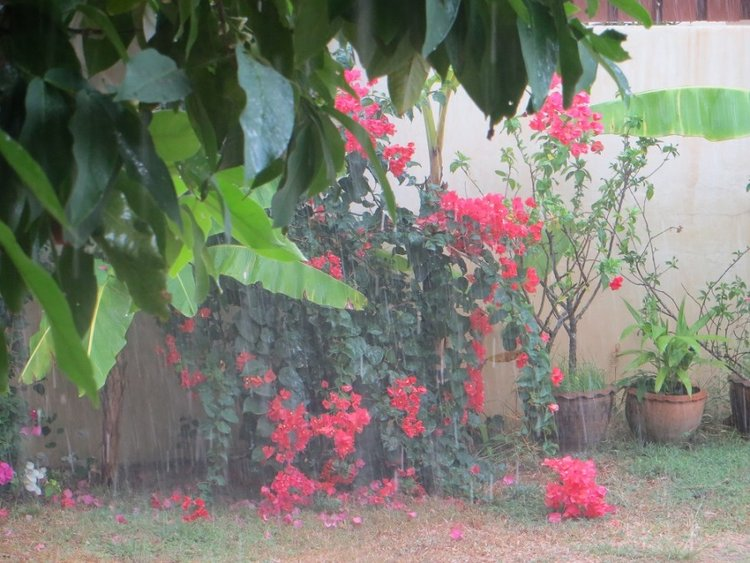 куст с цветами