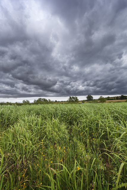 Green Cotswold landscape under threatening stormy clouds by Martyn Ferry Photography