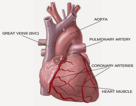 Obat Alami Jantung