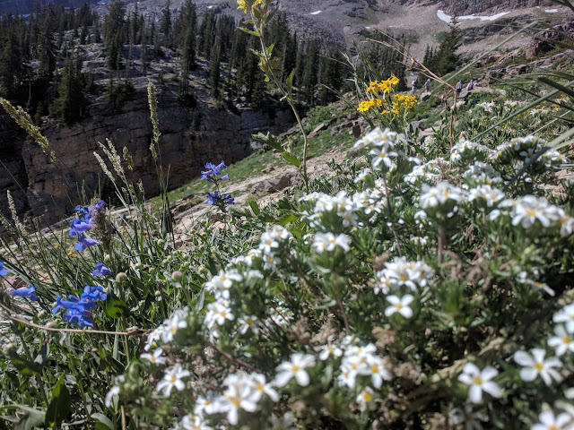 Pretty flower cluster of White, Blue and Yellow with the Orange cliff behind on Trail to Cecret Lake