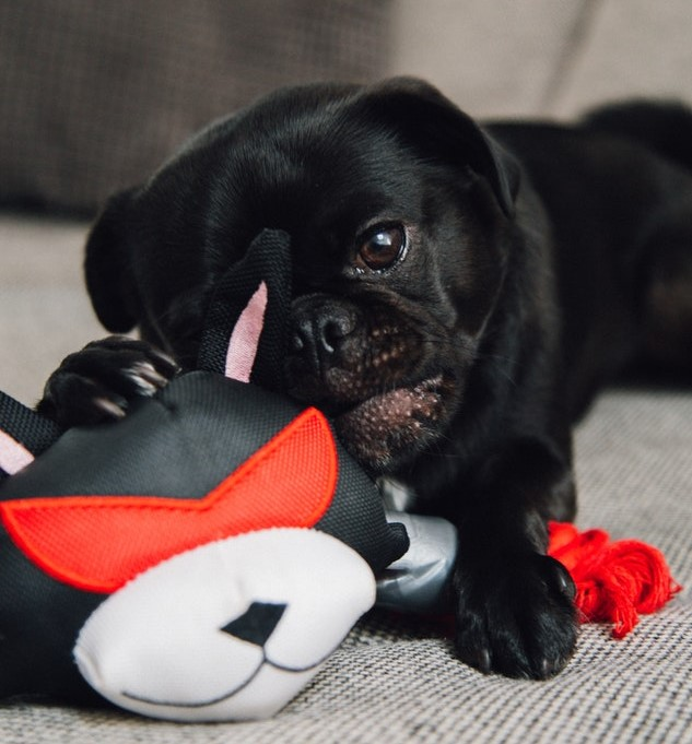 Dog with stuff toy