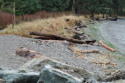 Bowman Bay Shoreline Restoration
