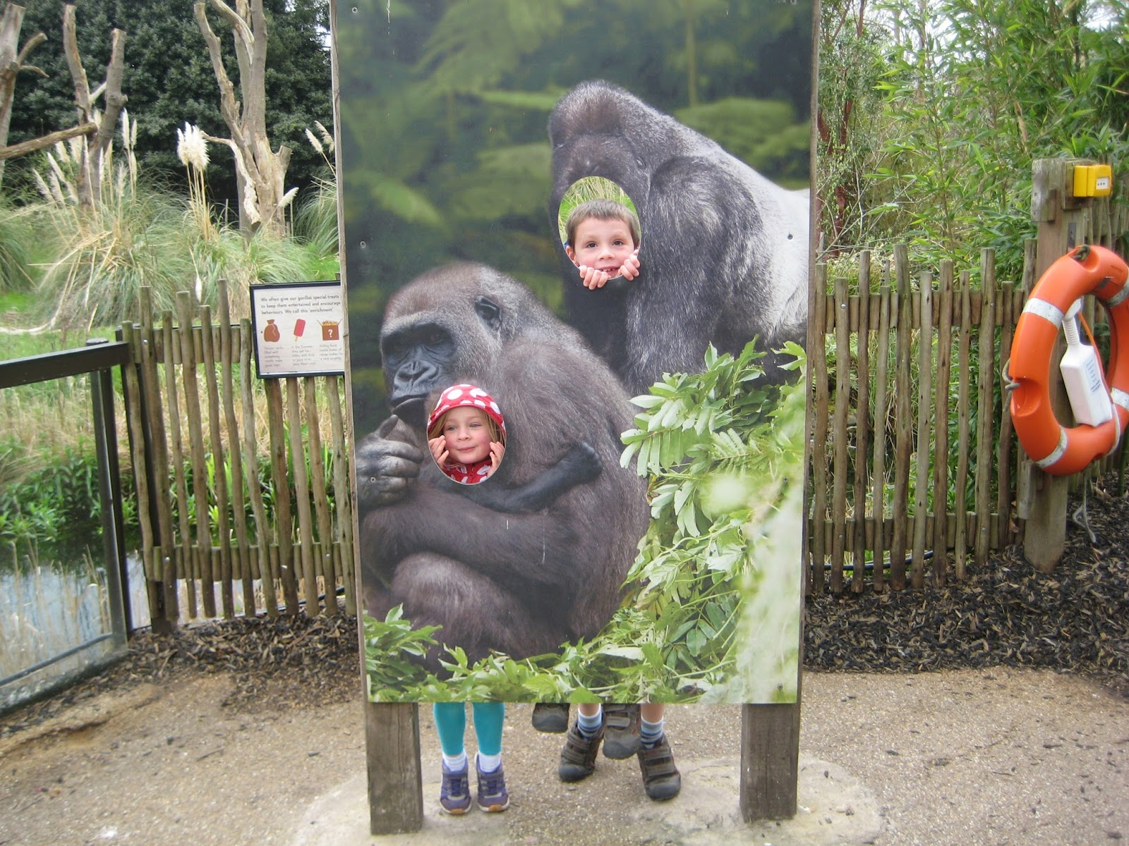 zoo fun Explore mary moore's board zoo fun on pinterest | see more ideas about activities, jungles and kindergarten.
