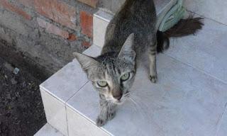Memahami Arti Suara Kucing Mengeong