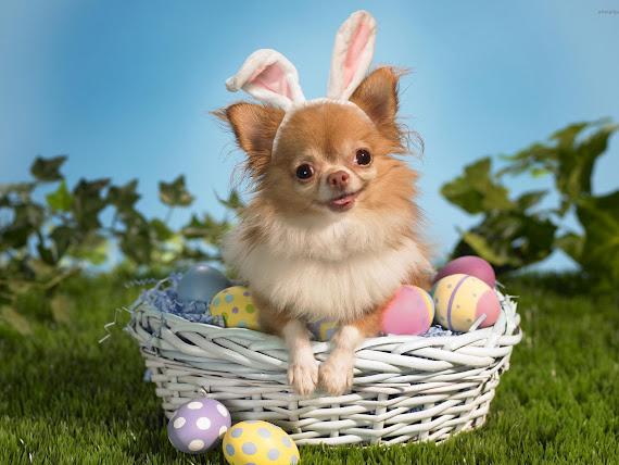 Happy Easter download besplatne pozadine za desktop 1600x1200 e-card čestitke Uskrs