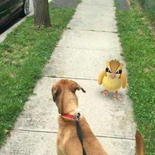 καταφύγιο αδέσποτων Pokemon Go