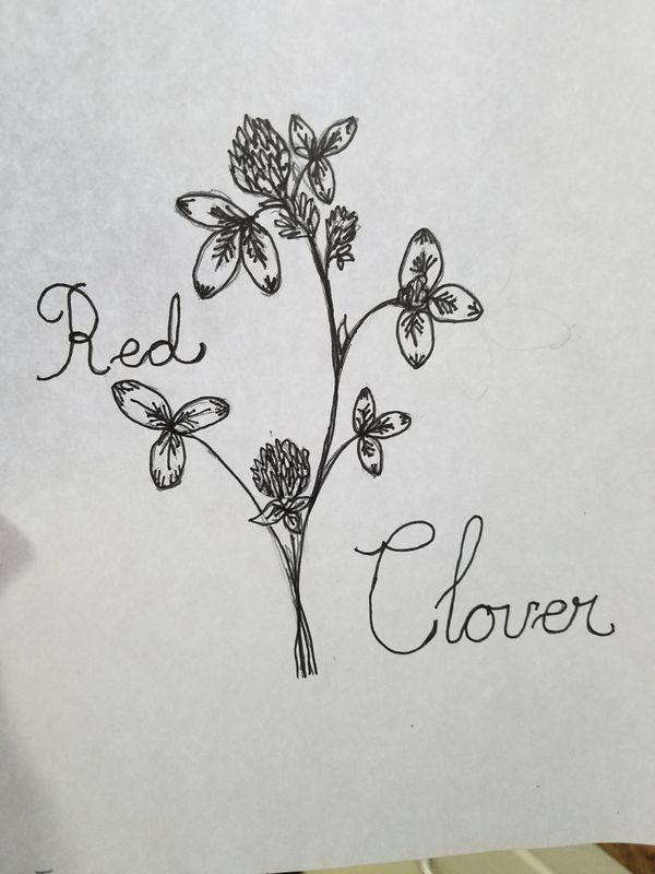 By the Eastern Gate: Red Clover :: Embroidery Template and Notebook Page