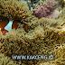 Pulau Abang Batam Tempat Snoorkeling Paling Ciamik di Batam