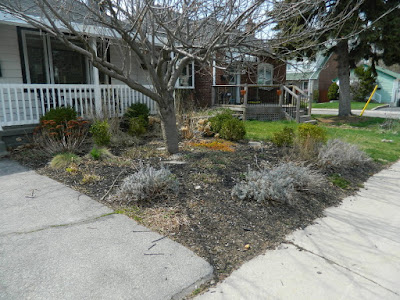 Scarborough Birch Cliff Front Yard Spring Garden Cleanup Before by Paul Jung Gardening Services a Toronto Gardening Company