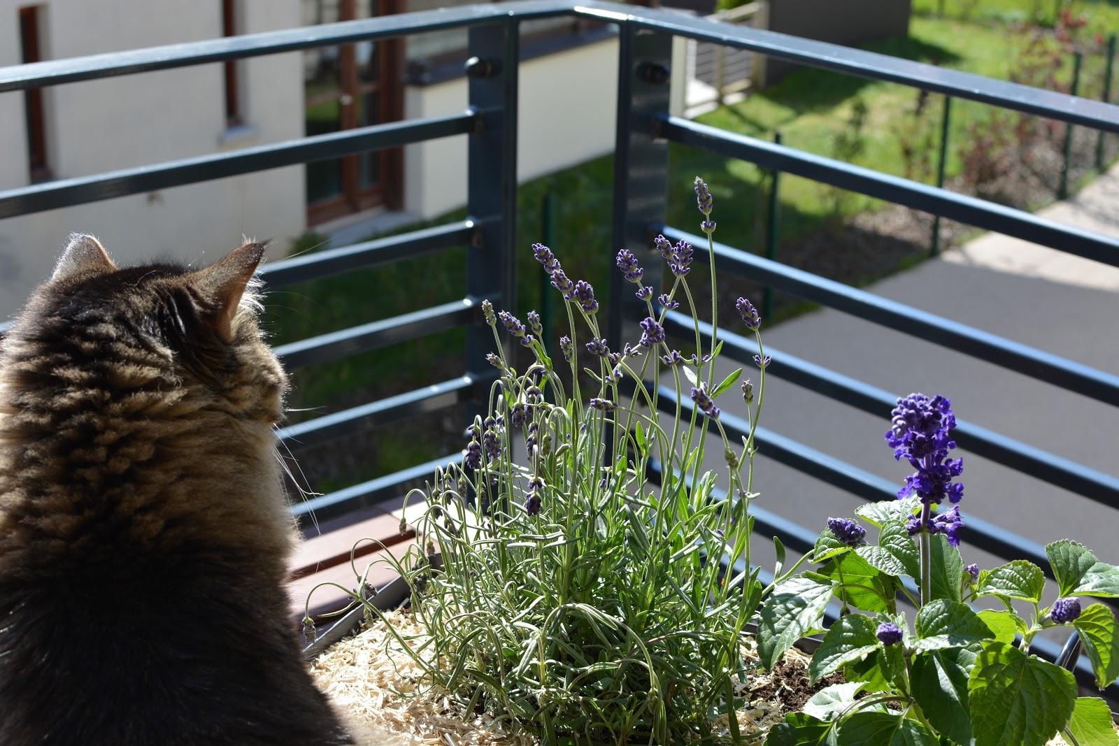 liste-plantes-fleurs-melliferes-aider-abeilles